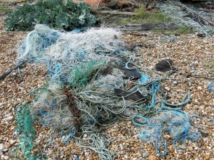 Dungeness, fishing line