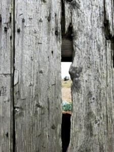 Dungeness, fishing hut wall
