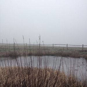 Elaine Bolt - Sussex dew pond